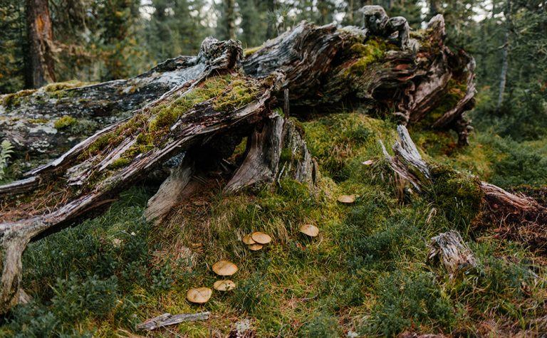European forests shrinking